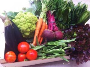verduras eco