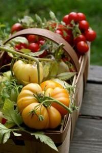 cesta verdura