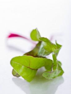 hojas remolacha